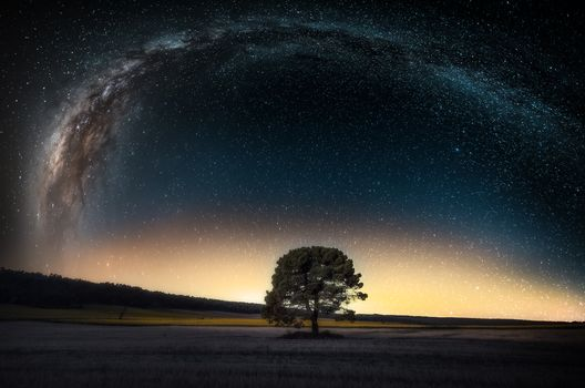 night, sky, Star, galaxy, Milky Way, space, planet, land, tree, forest, field