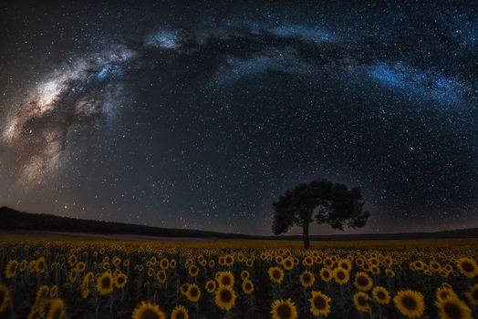 night, sky, Star, galaxy, Milky Way, space, planet, land, tree, forest, field, Flowers, Sunflowers, nature, landscape