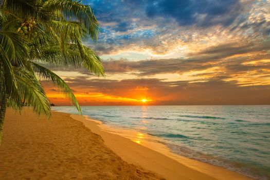sunset, sea, Palms, shore, landscape