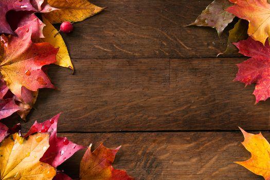 autumn, foliage, nature, background