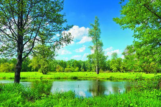 summer, lake, field, trees, landscape
