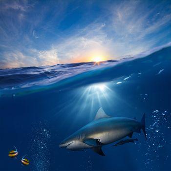 water, sea, waves, sun, shark, fish, animals, Underwater World, Rendering