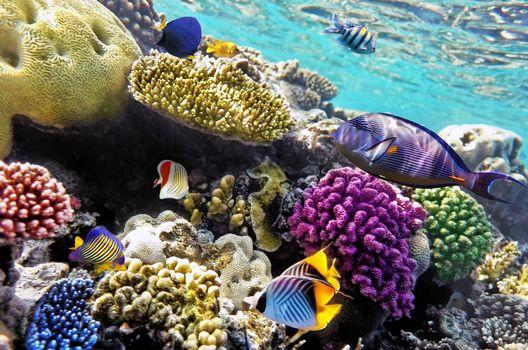 море, морское дно, рыбы, природа