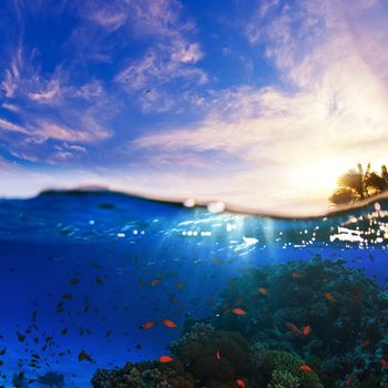 water, sea, waves, clouds, sky, fish, Underwater World, animals
