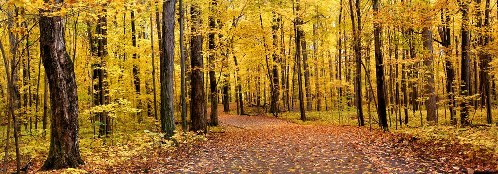 осень, парк, лес, деревья, дорога, пейзаж, панорама