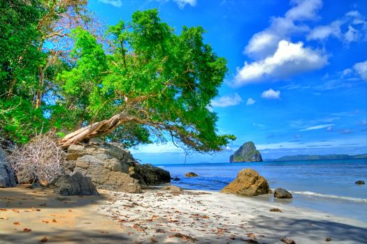 sea, shore, Rocks, tree, landscape