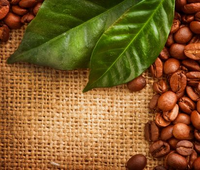 coffee, Grain, foliage