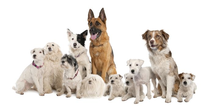 dog, Dog, animals, puppy, Puppies, company, get-together, drugany