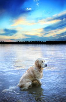 dog, Dog, animals, river, nature