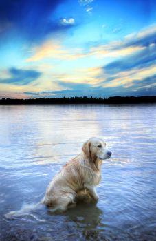 собака, собаки, животные, река, природа