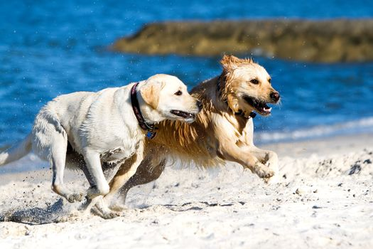 dog, Dog, animals, sea, shore, drugany, running, race
