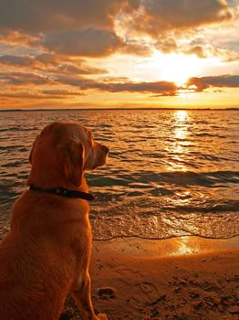 dog, Dog, animals, sea, landscape, sunset