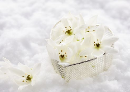 holidays, holiday, snow, Flowers, White, heart, Valentine