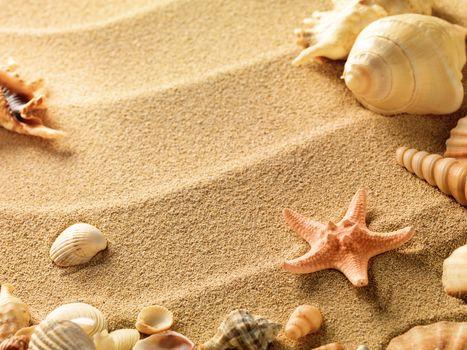 текстура, текстуры, ракушки, песок, фон, дизайнерские фоны