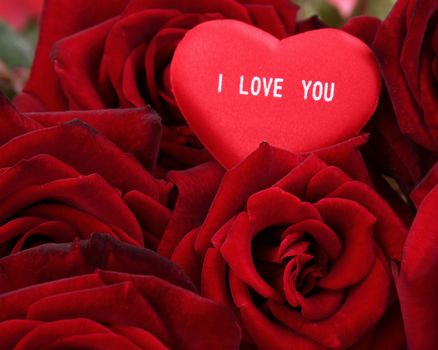 holiday, Valentine, heart, Roses, Flowers