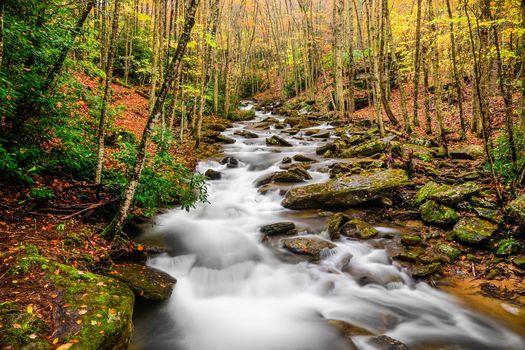 Pond Creek, Beech Mountain, North Carolina, autumn, river, trees, stones, landscape