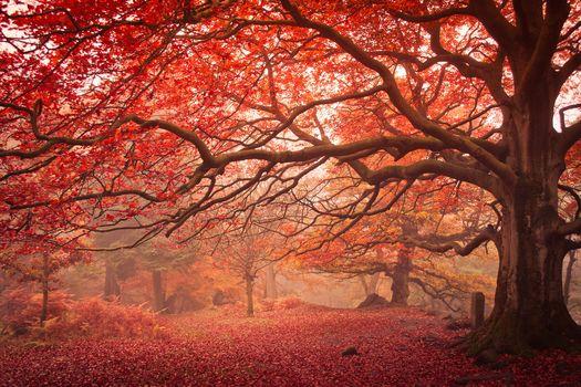 осень, лес, деревья, туман, природа