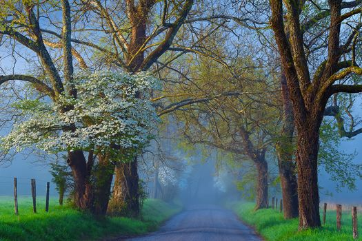 road, field, trees, fog, landscape