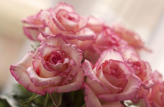 Букеты с розами (30 шт)