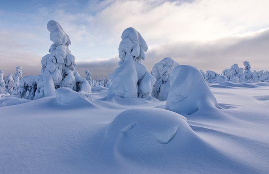 Sodankyla, Lapland, Finland, Соданкюля, Лапландия, Финляндия, зима, снег, сугробы, деревья