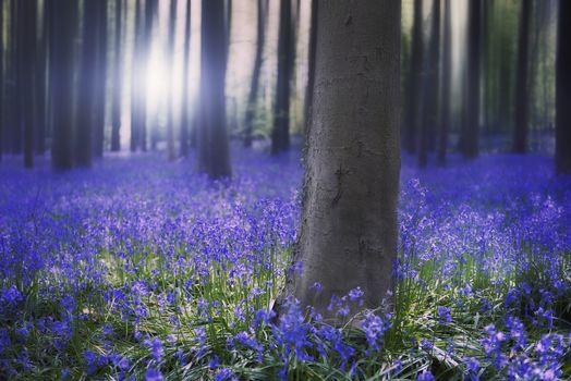 Весенний лес (2К, 30 шт)