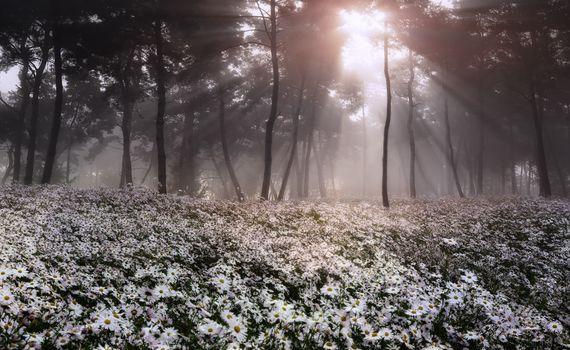 Весенний лес - 2 (18 шт)