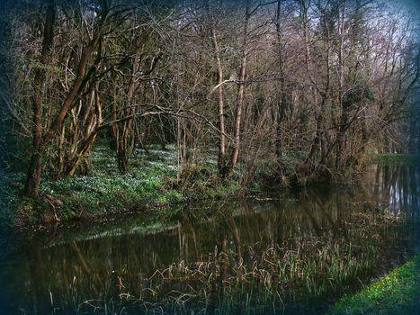 Kisenok рулит, лес, весна, цветы, природа, пейзаж, деревья, озеро