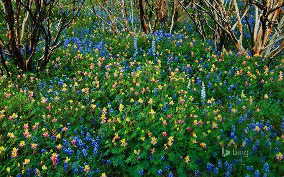Kisenok рулит, лес, весна, цветы, природа, пейзаж, деревья