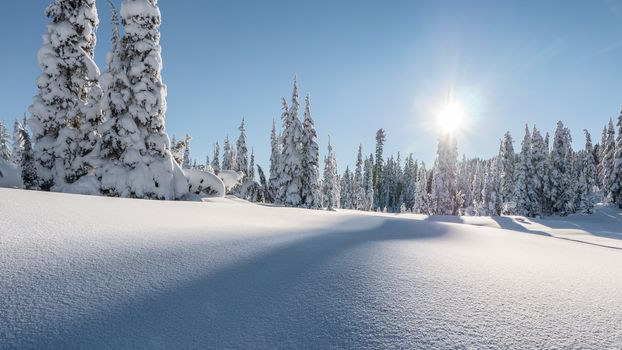 snow, forest, winter, Strathcona Park, Mt. Washington, British Columbia, Canada
