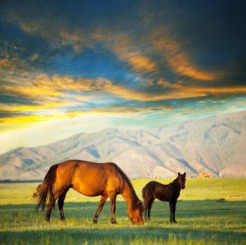 Kisenok рулит, лошади, кони, лошадь, конь, скакуны, скакун, жеребец