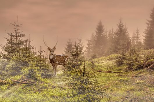 Олень, лес, ёлки, природа, животные