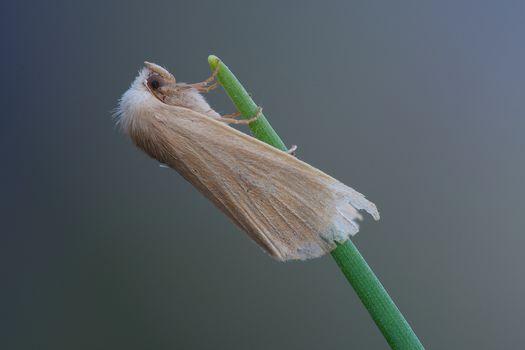 Kisenok рулит, бабочка, бабочки, мотылек, мотыльки, насекомое, насекомые, макро