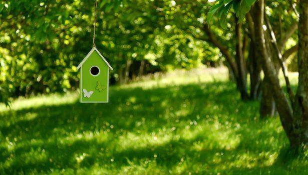 скворечник, деревья, зелень, боке