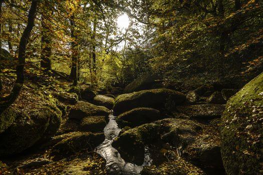Kisenok рулит, лес, деревья, осень, природа, водопад