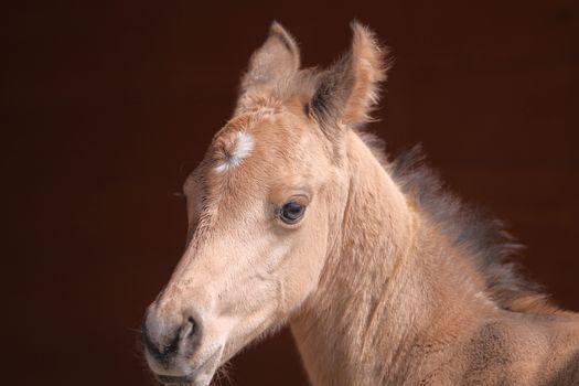 foal, horse, mordashka, sight