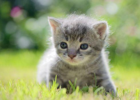 kitten, kid, hips