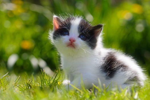 kitten, kid, sight