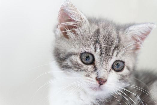 kitten, kid, muzzle, background