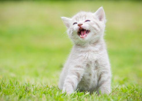 kitten, kid, pisklya