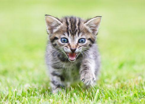kitten, kid, walk
