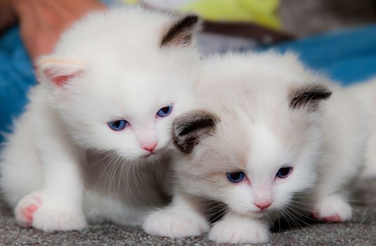 kittens, kids, couple