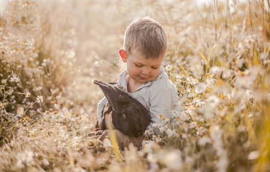boy, rabbit, friends, friendship, meadow, flowers, chamomile, mood