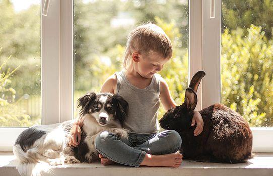 boy, rabbit, dog, friends, friendship, window, on the windowsill, mood