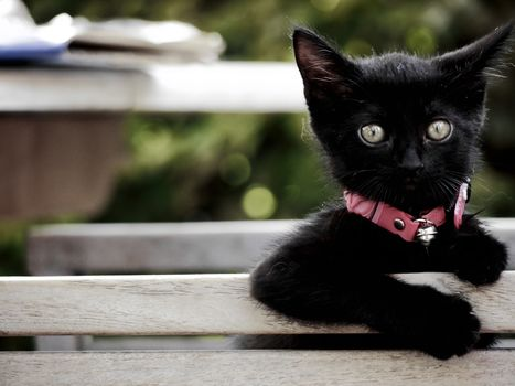 black kitten, kitten, kid, sight, collar