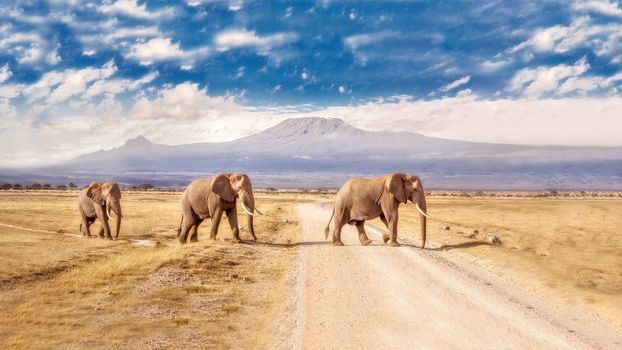 Amboseli National Park, Kenya, elephants