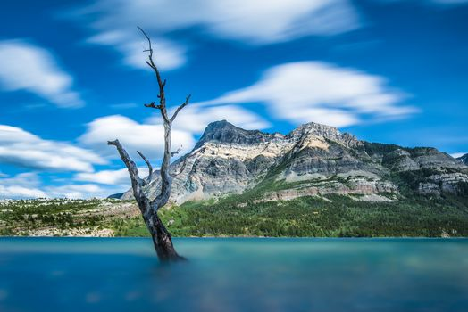Waterton Lake, Alberta, Canada, Waterton Lakes National Park, Canadian Rockies, Lake Waterton, alberta, Canada, National Park Waterton Lakes, Canadian Rockies, lake, the mountains, dried tree, tree, blur