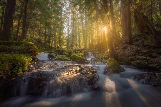 Panther Creek, Columbia River Gorge, Washington, Columbia River Gorge, Washington state, forest, River, cascade