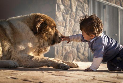 boy, child, dog, dog, acquaintance, friends