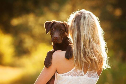 Labrador retriever, dog, puppy, girl