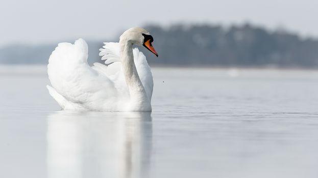 Лебединая песня (16:9)